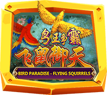 Bird Paradise-Flying Squirrels